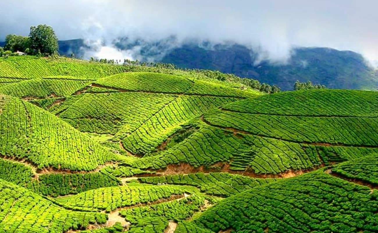 Top 6 Tourist Destinations in Munnar