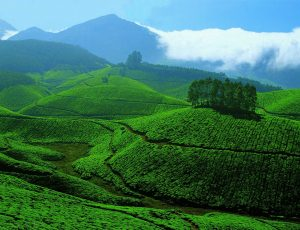 How to Plan a Short Trip to Munnar