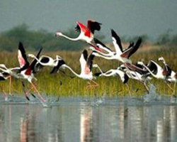 Golden Triangle Tour with Bharatpur Bird Sanctuary