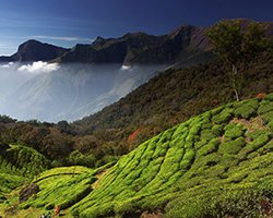 Roverholidays: Munnar Honeymoon Package