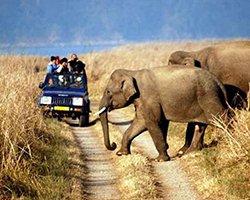 Roverholidays: Rajasthan Wildlife Tour