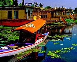 Roverholidays: Srinagar Tour Package