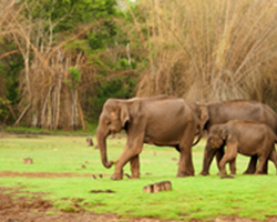 Roverholidays: South India Wildlife Tour