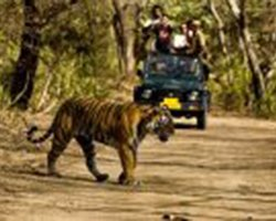 Roverholidays: Tiger Safari in North India
