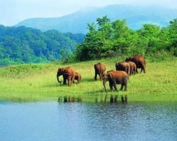 Roverholidays: Kerala Wildlife Backwater and Beach Tour