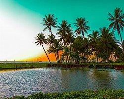 Roverholidays: Munnar Thekkady Tour Package