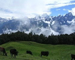 Roverholidays: Auli Tour Package