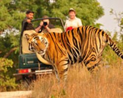 Roverholidays: North India Wildlife Tour