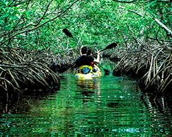 Roverholidays: Andaman Honeymoon Holidays